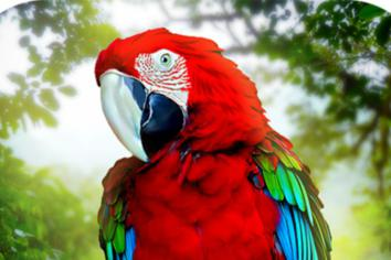 The day airport security found a parrot taped to a woman's leg...